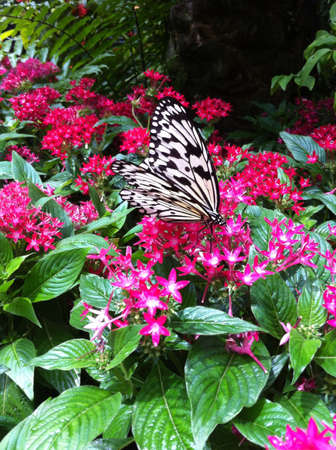 At a butterfly garden in Singapore