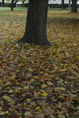 dean Pictures: COPENHAGENDANMARK DENMARK. autumn yellow and brown leaves in nature Oct. 12, 2008     (PHOTO BY FRANCIS DEAN  DEAN PICTURES)