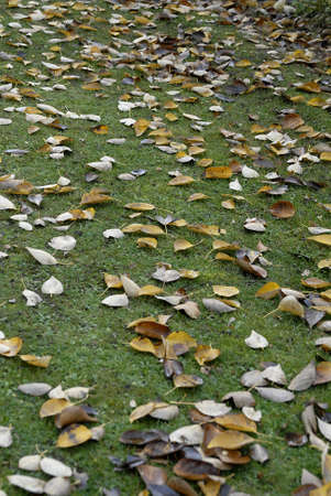 leif: autumn yellow and brown leaves in nature