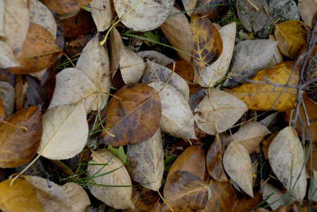 leif: COPENHAGENDANMARK DENMARK. autumn yellow and brown leaves in nature Oct. 12, 2008     (PHOTO BY FRANCIS DEAN  DEAN PICTURES)