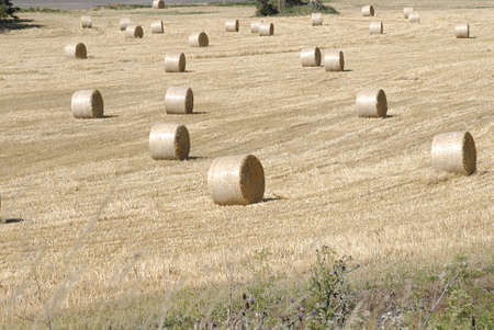 idaho state: SPALDING  IDAHO STATE USA  .   Wheat farms agriculture wheat cron ready to cut and round bales in fields 14 July 2010