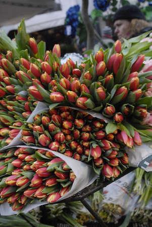 polictis: DENMARK  COPENHAGEN .Tulip flowers on sale 20 danish korners per bouquet 31 Dec. 2010