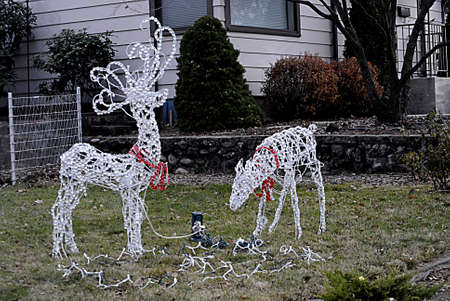 polictics: USAIDAHO STATE LEWISTON _American decorate home staging christmas deer in their yard to celebration christmas with christmas light 14 Dec. 2011        Editorial