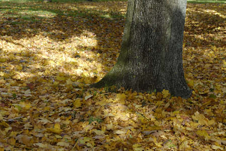 cretive: COPENHAGENDENMARK _   Autumn season and autumn leaves falling on grass 26 Oct. 2012    Stock Photo