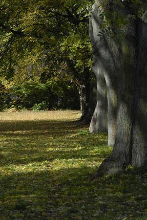 cretive: COPENHAGENDENMARK _   Autumn season and autumn leaves falling on grass 26 Oct. 2012