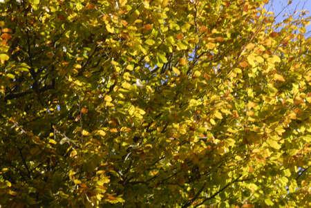 ediroial: Copenhagen  Danimarca. Cielo blu e foglie di autunno su treet 30 Ottobre 2012 (Foto di Francesco Giuseppe Dean  Dean Pictures) Archivio Fotografico