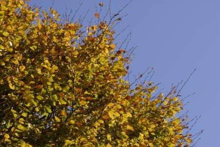 ediroial: Copenhagen  Danimarca. Cielo blu e le foglie d'autunno su treet 30 ottobre 2012 Archivio Fotografico
