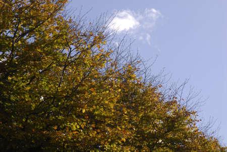 ediroial: Copenhagen  Danimarca. Cielo blu e foglie di autunno sul treet 30 Ottobre 2012