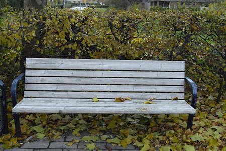 ediroial: Copenhagen   Denmark  Autumn season leaves trees and bench in park 8 Nov  2012
