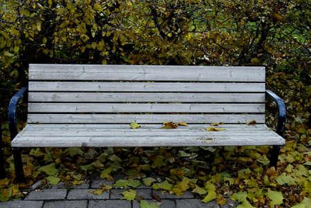 ediroial: Copenhagen   Denmark  Autumn season leaves trees and bench in park 8 Nov  2012        Stock Photo