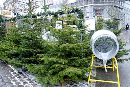 ediroial: Copenhagen  Denmark.  Christmas trees for christmas celebrations 6 Dec. 2012         Editorial