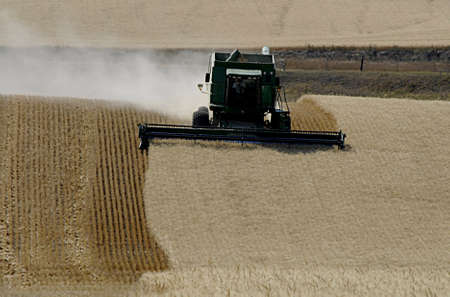 NEZ PERCE LEWIS COUNTYIDAHO STATE USA _  27 August 2013 Nez Perce Lewis county formers harvesting Wheat harvest Idado state USA