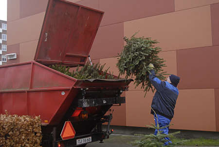 KASTRUPCOPENHAGEN Denmark-   6 January 2014   _Tow danish landscapers collecting waste christmas trees and transporting with  United States made John Deere tractor          Editorial