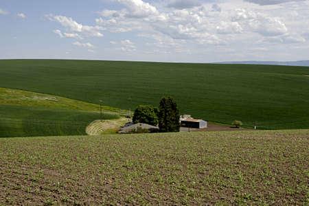 idaho state: JULIAETTAIDAHO USA-  Idaho state farmland at juliaetta        31 May 2014