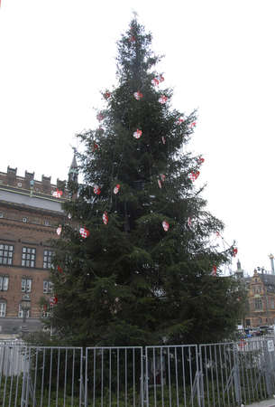 tradional: COPENHAGENDENMARK_Annual christmas tradional tree been plae at Copenhagen Twon Hall sq.            30 November  2014