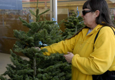 chrstmas: Lewiston . Idaho state. USA   _American woman is inspecting christmas tree imported from Oregan state to buy and chrstmas tree cost 30$ us sollars at Rite Aid super store at Lewiston central mall              16 December   2014.