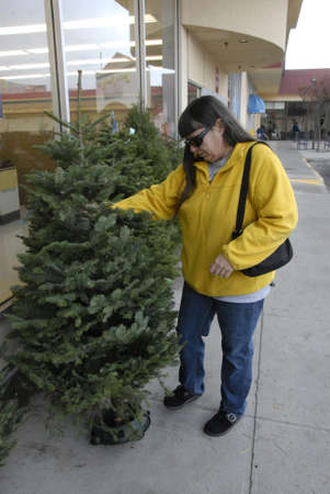 rite: Lewiston . Idaho state. USA   _American woman is inspecting christmas tree imported from Oregan state to buy and chrstmas tree cost 30$ us sollars at Rite Aid super store at Lewiston central mall              16 December   2014.