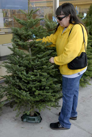 Lewiston . Idaho state. USA   _American woman is inspecting christmas tree imported from Oregan state to buy and chrstmas tree cost 30$ us sollars at Rite Aid super store at Lewiston central mall              16 December   2014.
