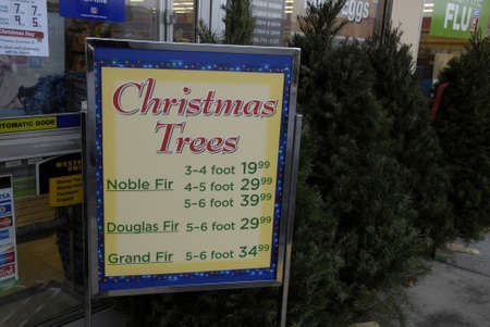 Lewiston . Idaho state. USA   _American woman is inspecting christmas tree imported from Oregan state to buy and chrstmas tree cost 30$ us sollars at Rite Aid super store at Lewiston central mall              16 December   2014