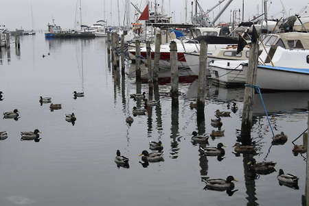 habour: dragorCopenhagenDenmark 04 October   2015_Gray day at dragor fishing habour today on sunday noon Editorial
