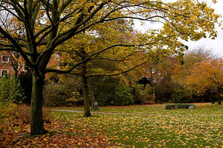 autumn colour: Trees and leave full with autumn folden colour .