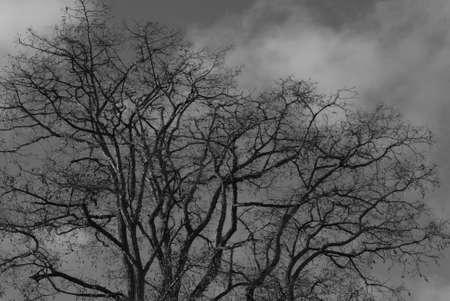 kastrup: Kastrup_ Copenhagen_Denmark _10 March  2017_ Ligh and tree and natural light