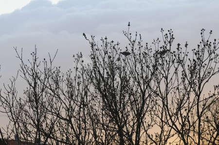 kastrup: Kastrup_ Copenhagen_Denmark _18.April 2017_Sunset over Kastrup and two pigeon on tree.