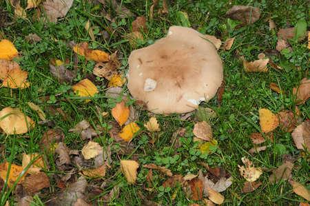 Wild mushroom grow in nature. Stock Photo