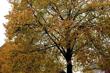 Deens weer met gouden bladeren tijdens de herfst Stockfoto