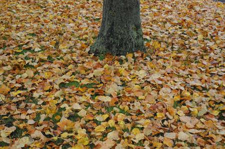 가을 동안 황금 잎 덴마크어 날씨