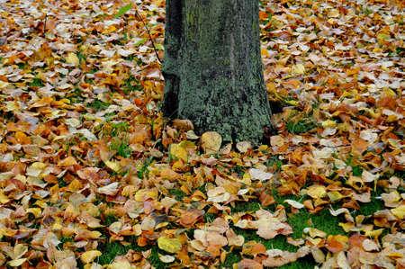 Gouden herfst in Deens weer