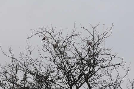 CLARKTSONWASHINGTONUSA 01 January 2018  cold wineter weather, sparrow and pigeons  take refuge on tree.