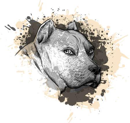 Collection d'animaux : Chien. Portrait d'un pitbull. Gros plan sur un fond blanc, avec des éléments de peinture giclée et goutte à goutte.
