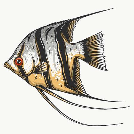 Black scalar fish on white background, vector illustration Illustration