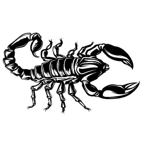 vector of a Scorpion illustration on isolated background Vectores