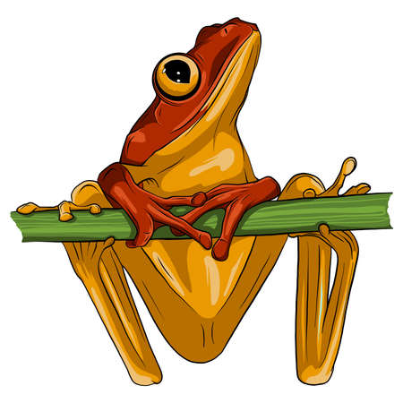 Vector image of an frog design on white background, Vector frog for your design. 向量圖像