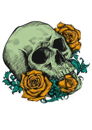 A human skull with roses on white background