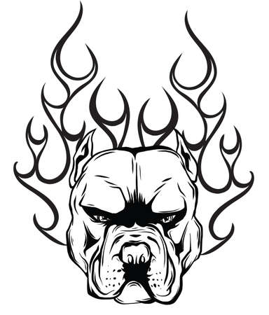 head dog Pitbull vector illustration with fire Çizim