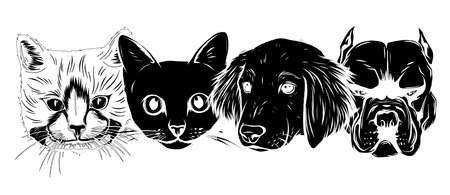 Cat and Dog characters. Best friend forever, vector illustration. Ilustrace