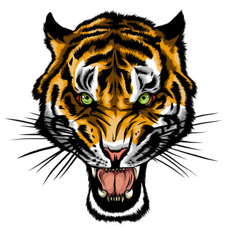 Tiger anger. Vector illustration of a tiger head. Ilustração