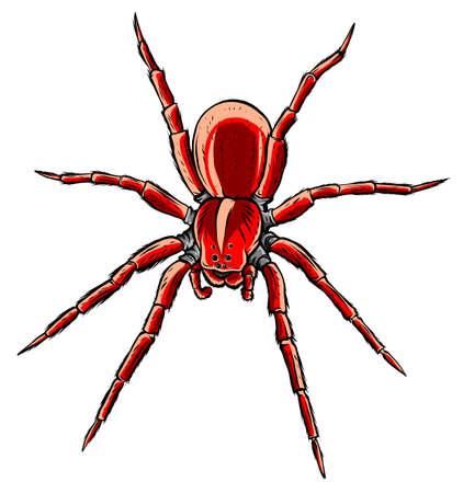 Red back spider, illustration and simple design.