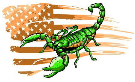 The illustration shows a wild scorpion. vector