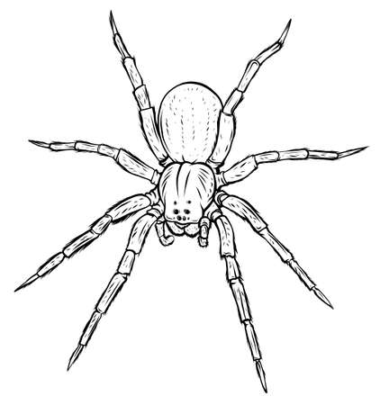 vector back spider, illustration and simple design.