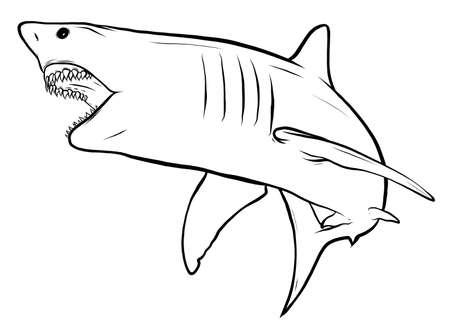 shark white angry vector illustration graphics art