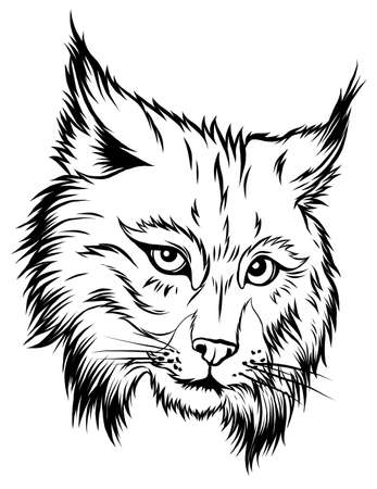 The illustration shows an angry bobcat face. The wild animal has sharp fangs and looks scary.