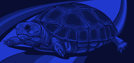Cartoon vector on colored background turtle. vector