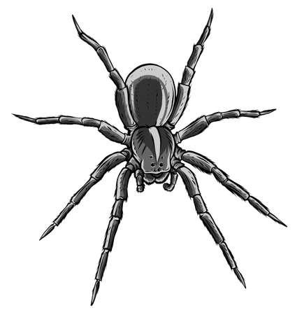 monochromatic Cute spider cartoon vector illustration graphics art