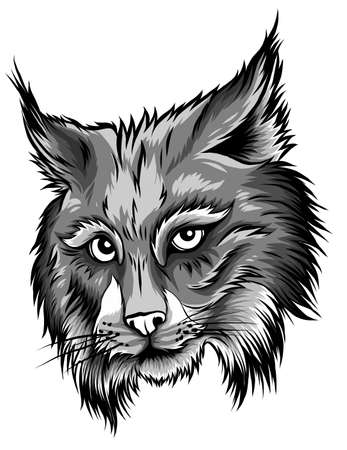 Eurasian lynx isolated vector illustration. Vector hand drawn wild animal sketch icon.