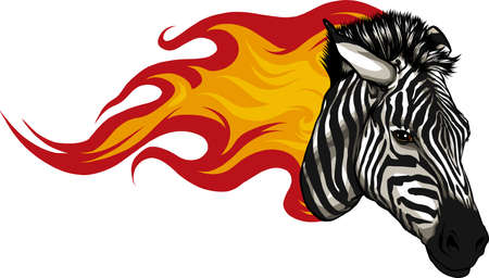 zebra head with flames Vector illustration design