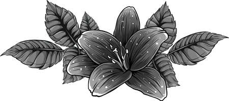 vector illustration of lily flower with leaves Banco de Imagens